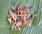 Fried Insects High protein & very good for you