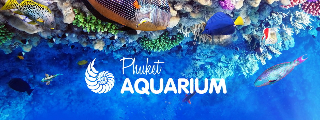 Phuket Aquarium - Public Aquarium Family Activity Destination