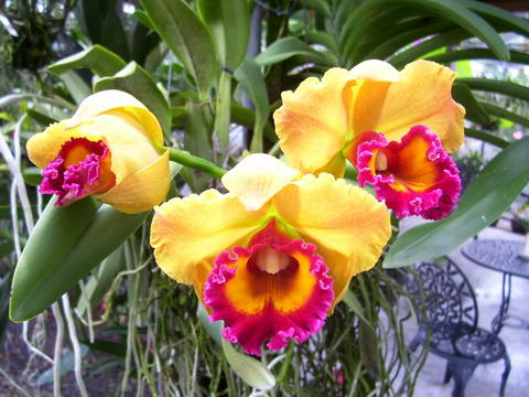 Phuket Orchid Farm Orchid Sales Exports Tours Jewellery Phuket Thailand