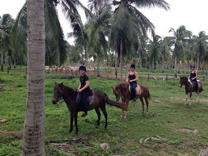 Phuket Riding Club Horse Riding School Trekking Phuket Thailand