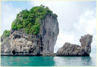 Phuket Tropical Marine - Speedboat Tours camel