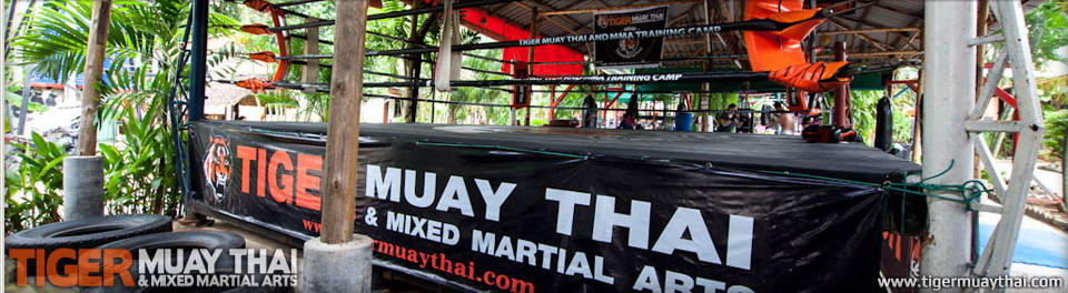 Muay Thai, Thaiboxing & MMA Tiger Muay Thai Training Camp, Phuket, Thailand